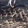 Hajfensfiske för den oinvigde