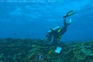 Dykare undersöker korallblekning vid Phoenixöarna
