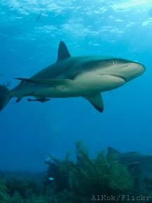 Ett stort steg för Chiles hajar