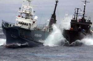 Fartyg tillhörande Sea Shepherd och Institue for Cetacean Research