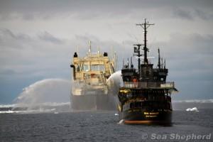 Sea Shepherd jagar det japanska fabriksskeppet Nisshin Maru bland havsisen i Antarktiska oceanen