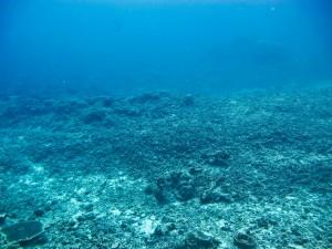 Sprängda koraller