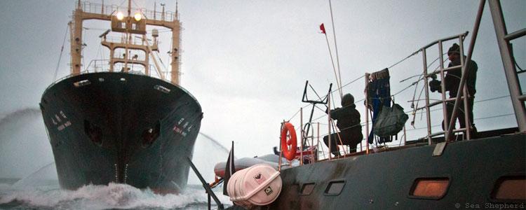 Nisshin Maru jagar Sea Shepherds Gojira