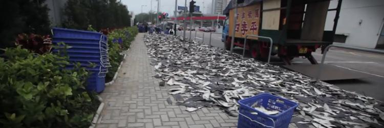 Hajfenor på gatan i Hong Kong