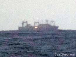 Nisshin Maru i horisonten