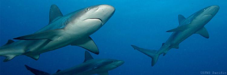 Biologer upptäcker 79 nya arter av haj och rocka
